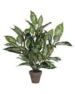 Kunstplant Dieffenbachia, Groen