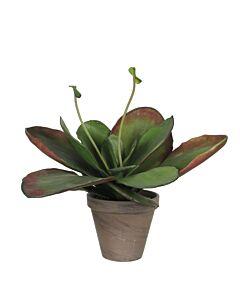 Kunstplant Kalanchoe Thyrsiflora, Groen